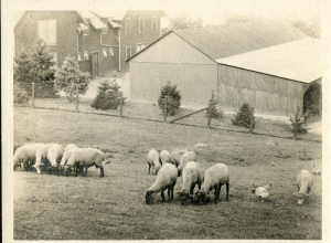 """""""Upper left of photo is the Sheep Barn in 1915."""""""
